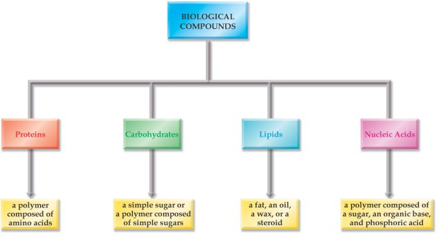Chemistry of Biomolecules I