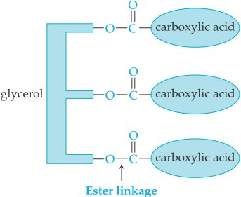 Ester linkage for fatty acids